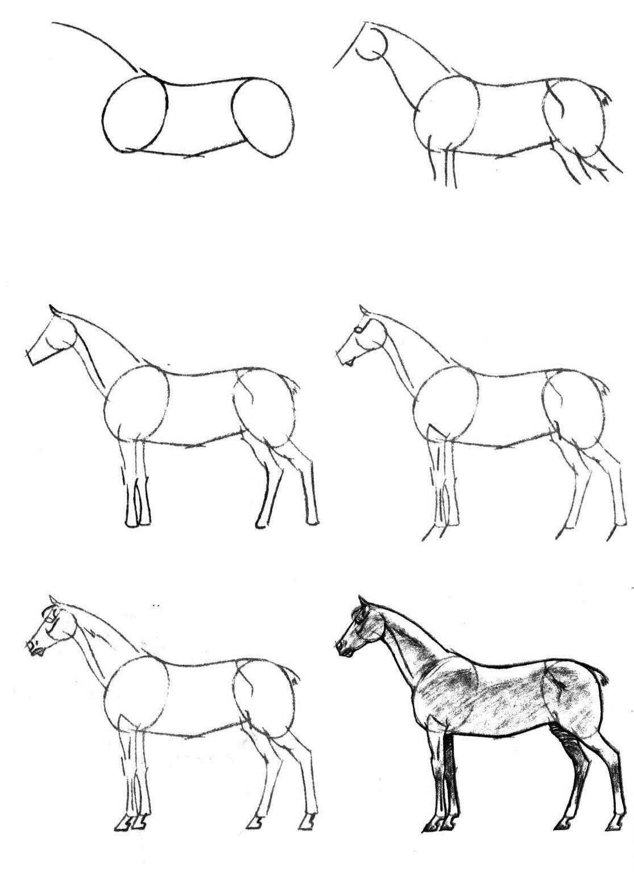 Как нарисовать лошадь поэтапно карандашом (61 фото) - легкие мастер-классы для начинающих