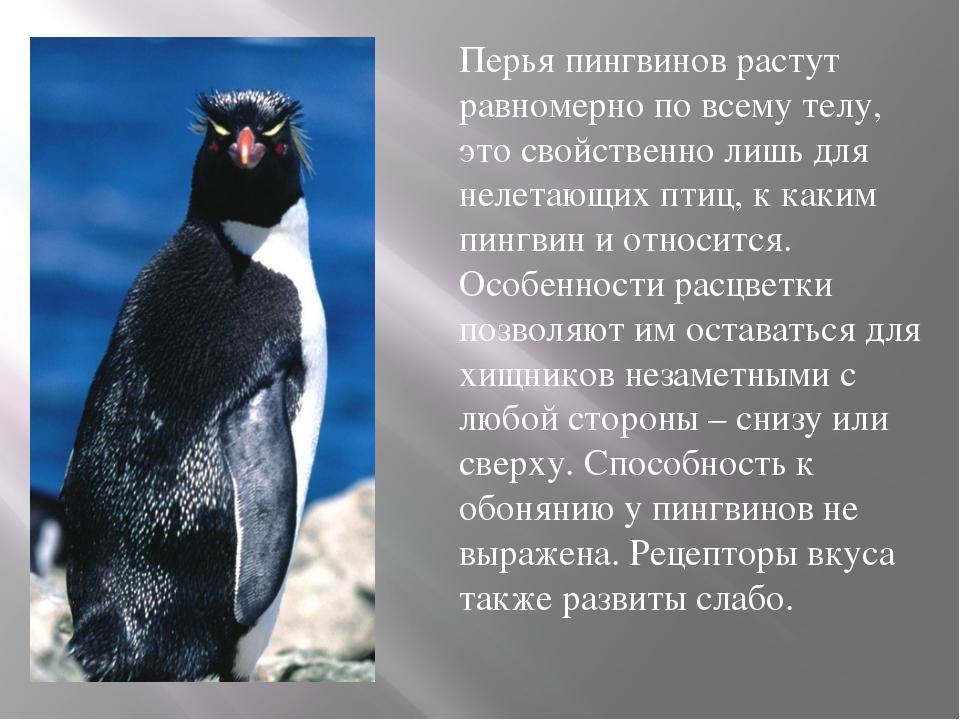 Императорский пингвин ? фото, описание, ареал, питание, враги ✔
