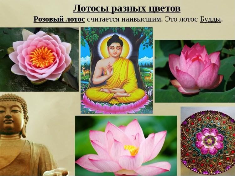 Лотос — божественный цветок востока, или символ чистоты и совершенства в творчестве
