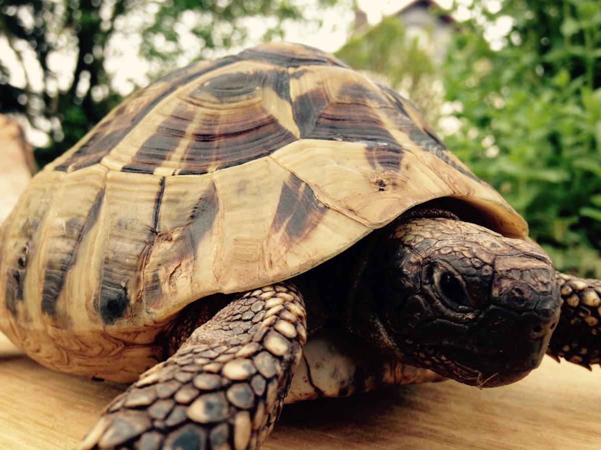 10 фактов о черепашках-ниндзя: все, что стоит о них знать