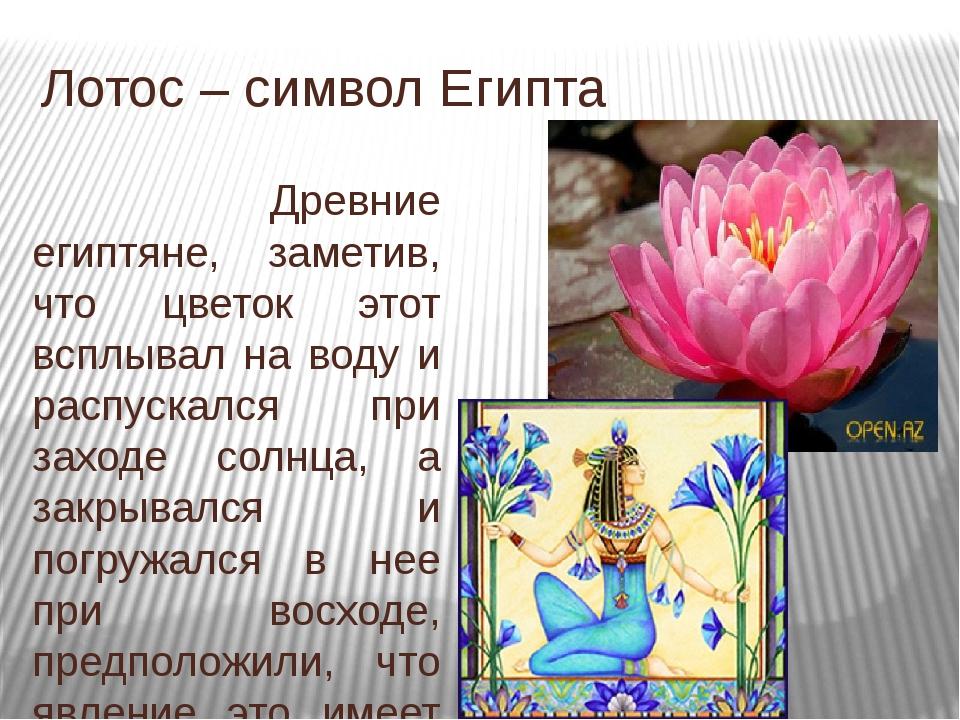 Лотос – священный цветок востока
