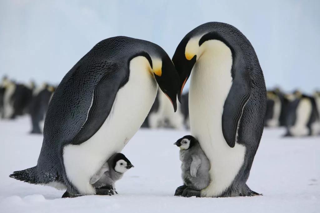 Где обитают пингвины? места обитания всех видов