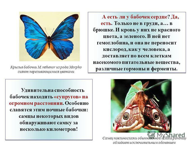 Все, что обязательно нужно знать о бабочке