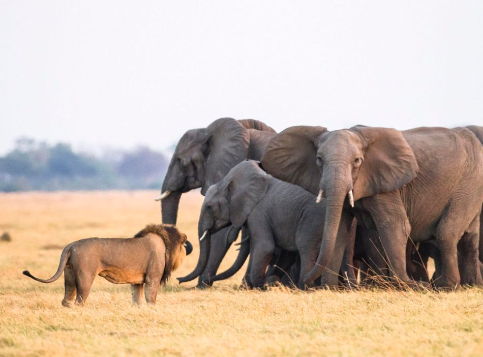 Слон - 89 фото наиболее крупного млекопитающего суши