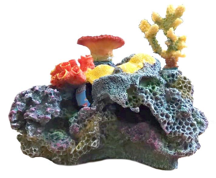 История, свойства и применение кораллов