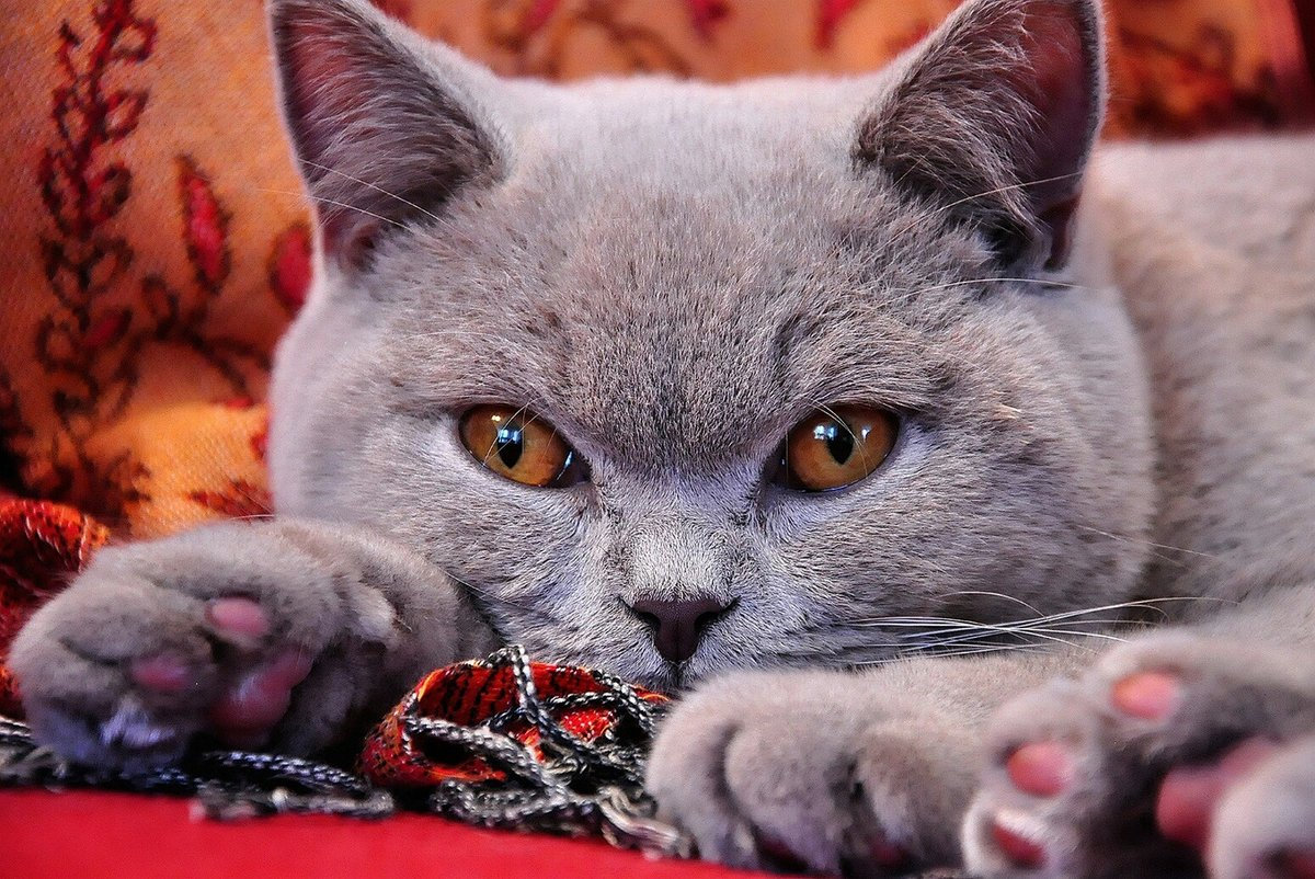 Кошечка (фильм, 2009) — википедия. что такое кошечка (фильм, 2009)