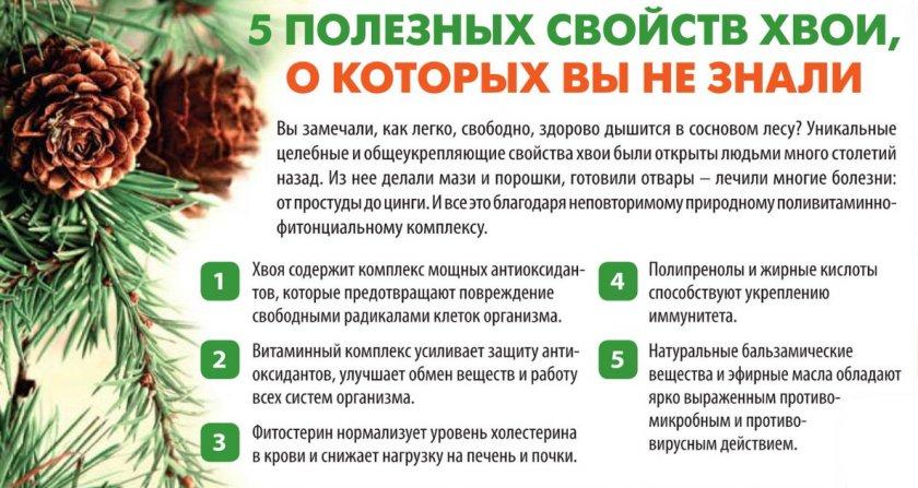 Топиарий из шишек (44 фото): пошаговые мастер-классы изготовления из сосновых и еловых шишек, орехов и цветов, желудей и листьев своими руками