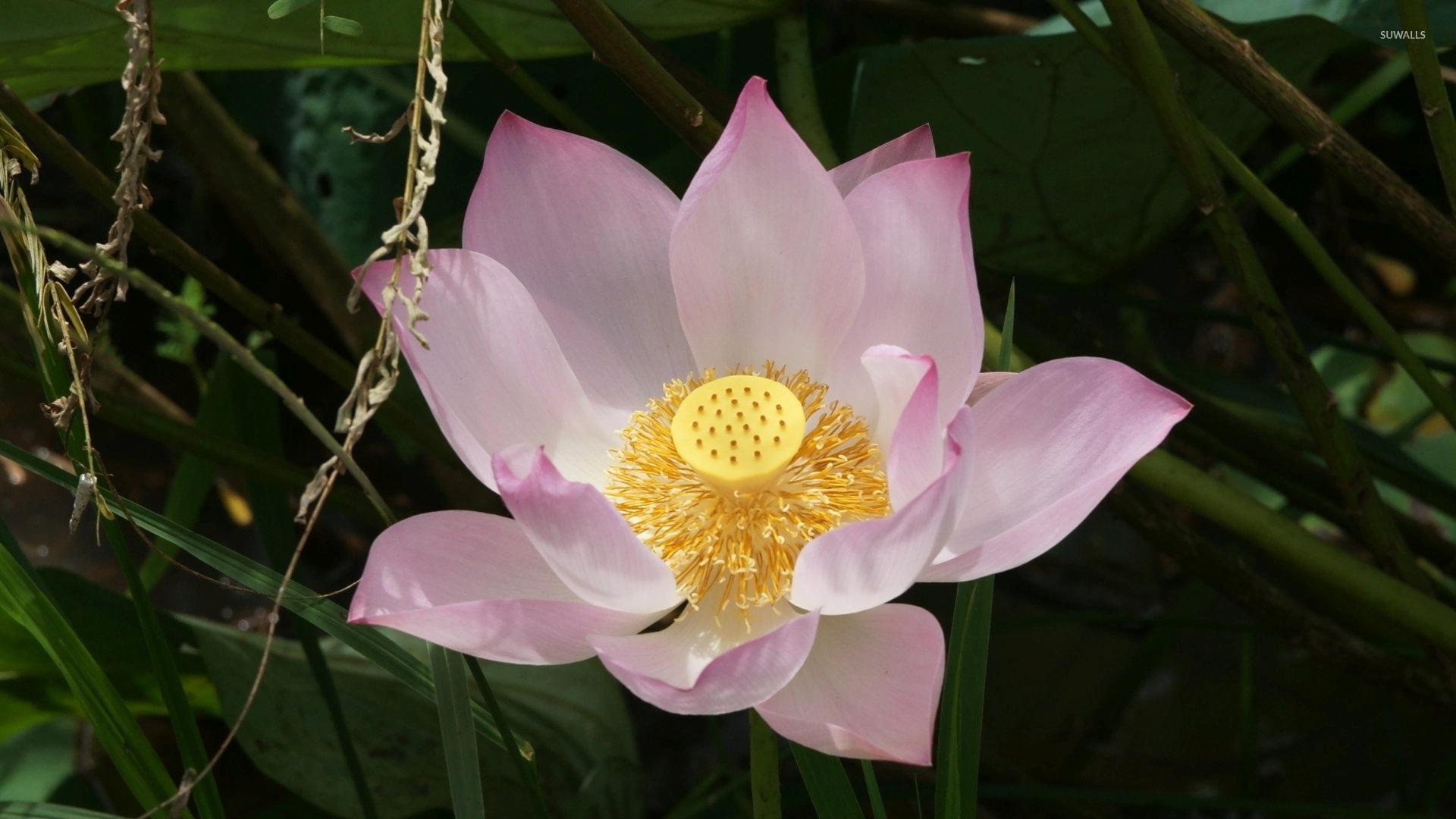 Техника выполнения медитации «цветок лотоса»