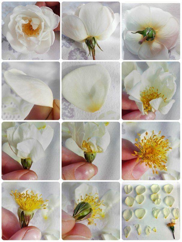 Цветы из полимерной глины - пошаговый мастер-класс для начинающий (76 фото)