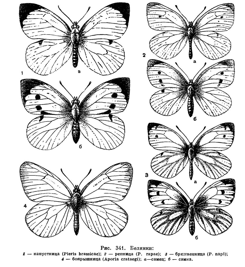 Маджонг бабочки — играть онлайн бесплатно