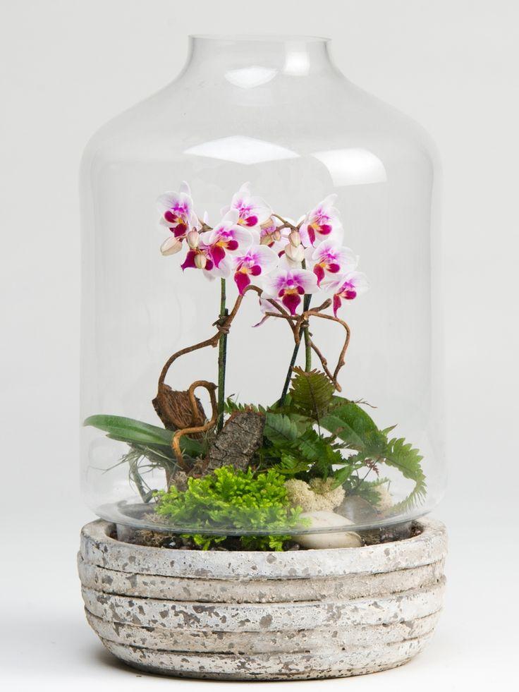 Флорариум: виды и устройства, как сделать своими руками