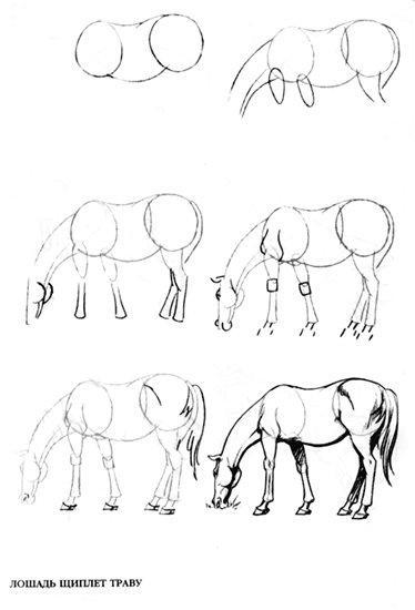 Как нарисовать лошадь: поэтапно с помощью карандаша