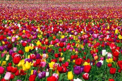 Стихи праздник весны - сборник красивых стихов в доме солнца