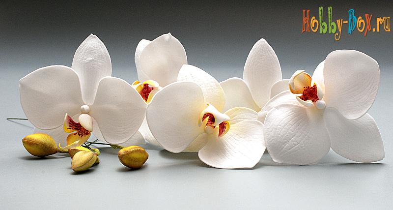 """Мастер-класс поделка изделие лепка мастер-класс """"орхидея из холодного фарфора"""" фарфор холодный"""