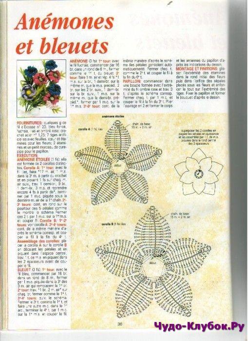Звезда востока, прекрасной лилии цветок! - lilia vignan