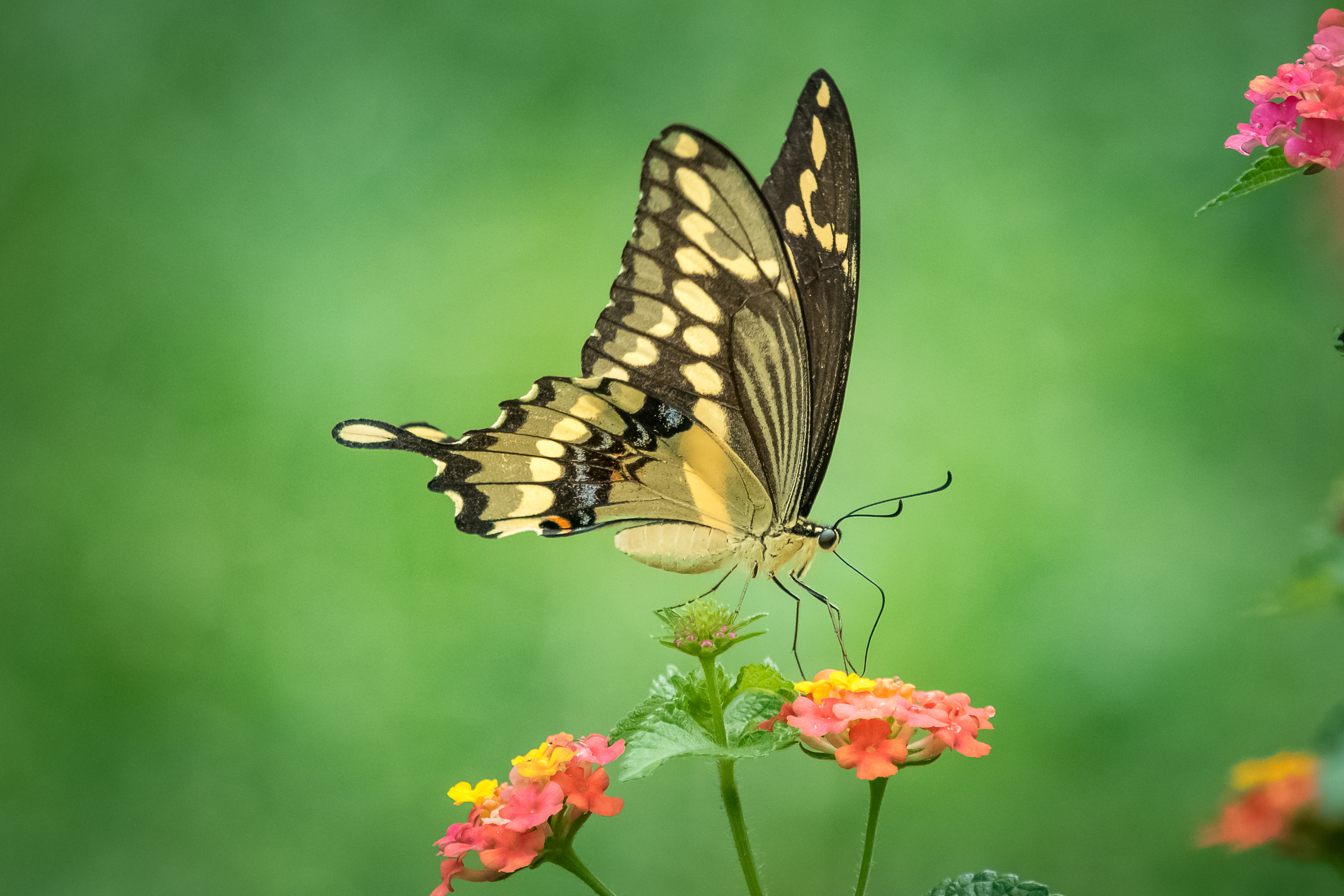 Красивая открытка бабочка с цветами своими руками