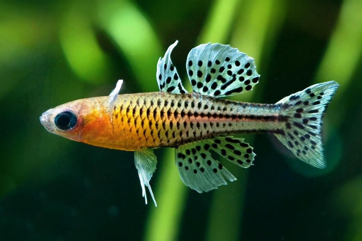 Аквариумные рыбки для начинающих: каких рыбок лучше завести