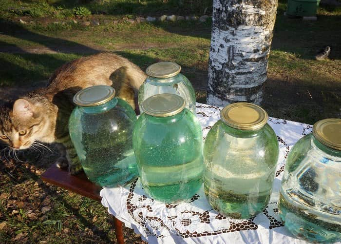 Домашний березовый сок на зиму - рецепт