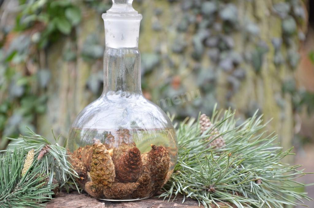 Настойка на сосновых шишках на водке для здоровья и долголетия