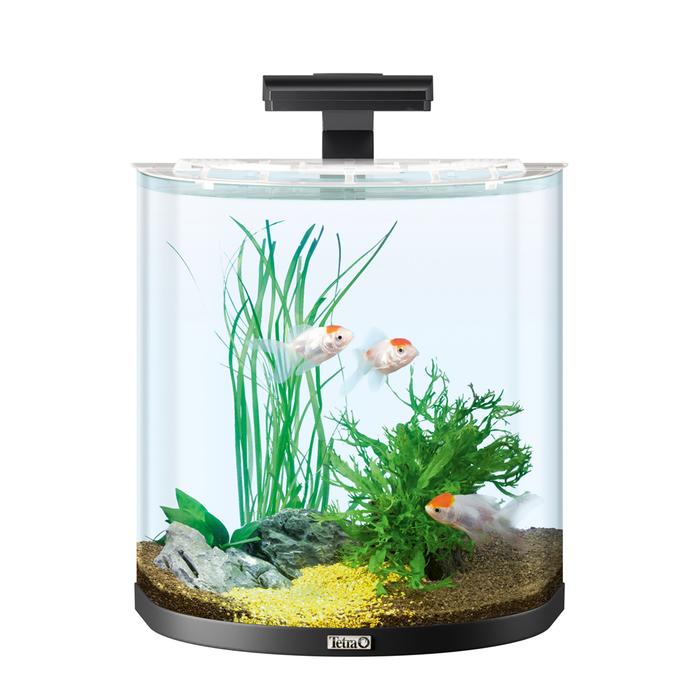 Маленький аквариум: каких рыбок можно держать, уход и содержание