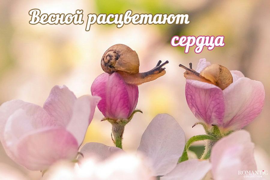 Первый день весны - поздравления с весной (стихи, картинки)