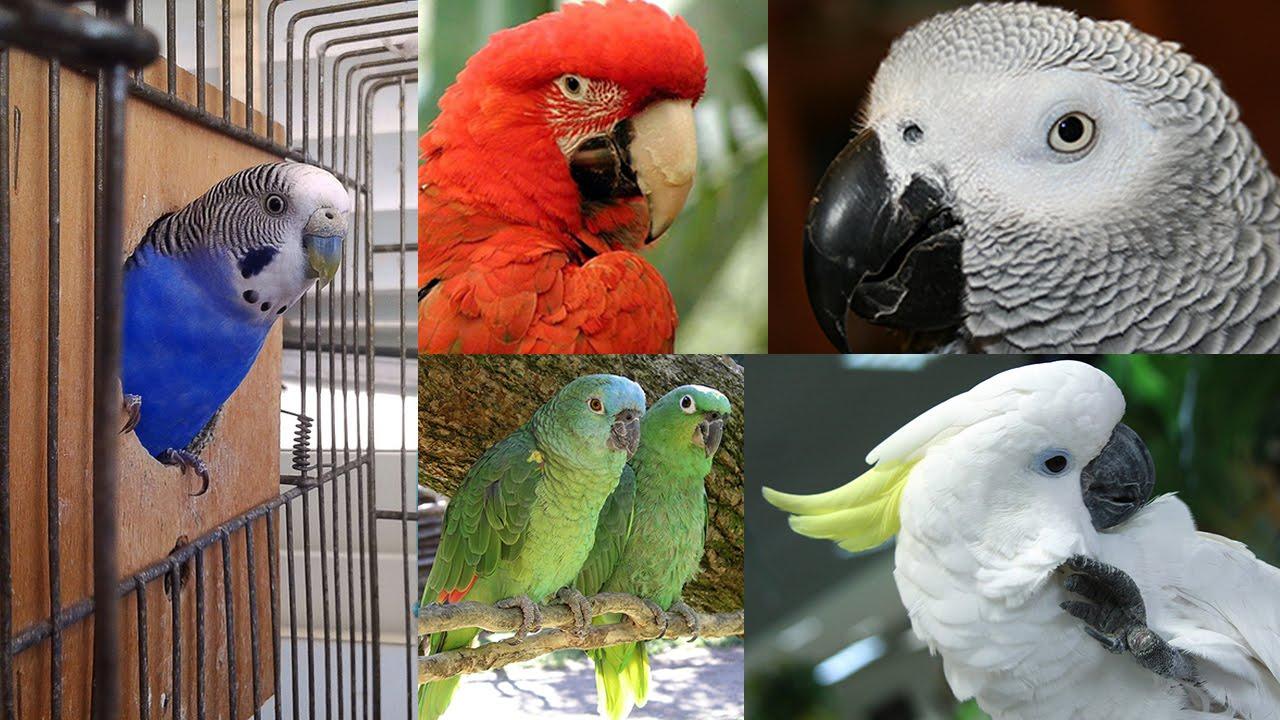 Виды попугаев: описания, названия и особенности пород попугаев