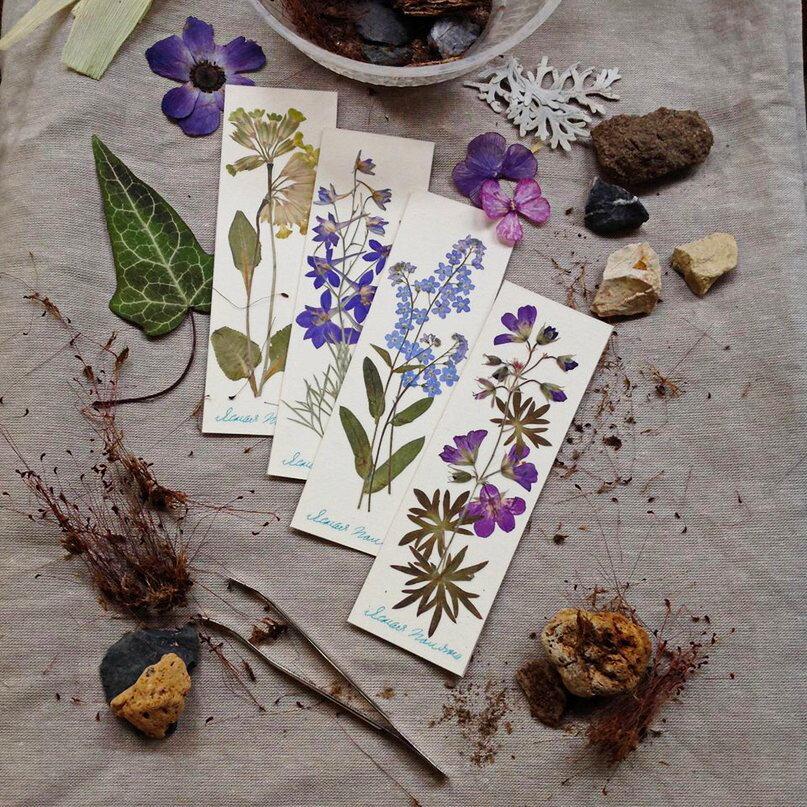 Гербарий: как сделать правильно альбом или папку своими руками, как засушить цветы, фото в интерьере
