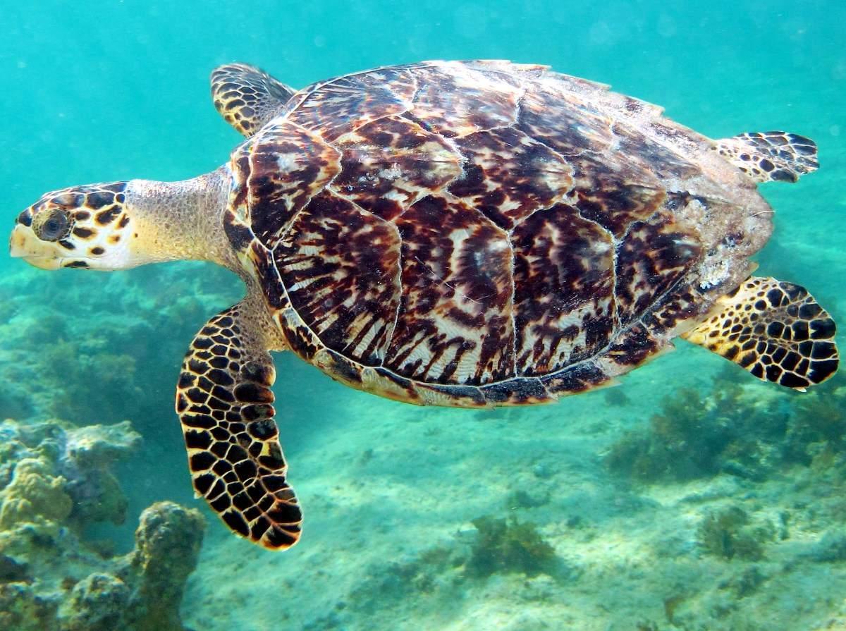 Черепаха по фэн-шуй - что означает этот символ