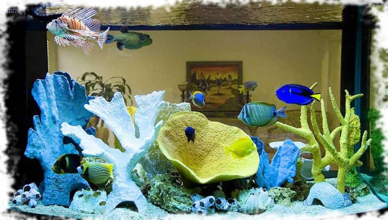 Кораллы и коралловые рифы