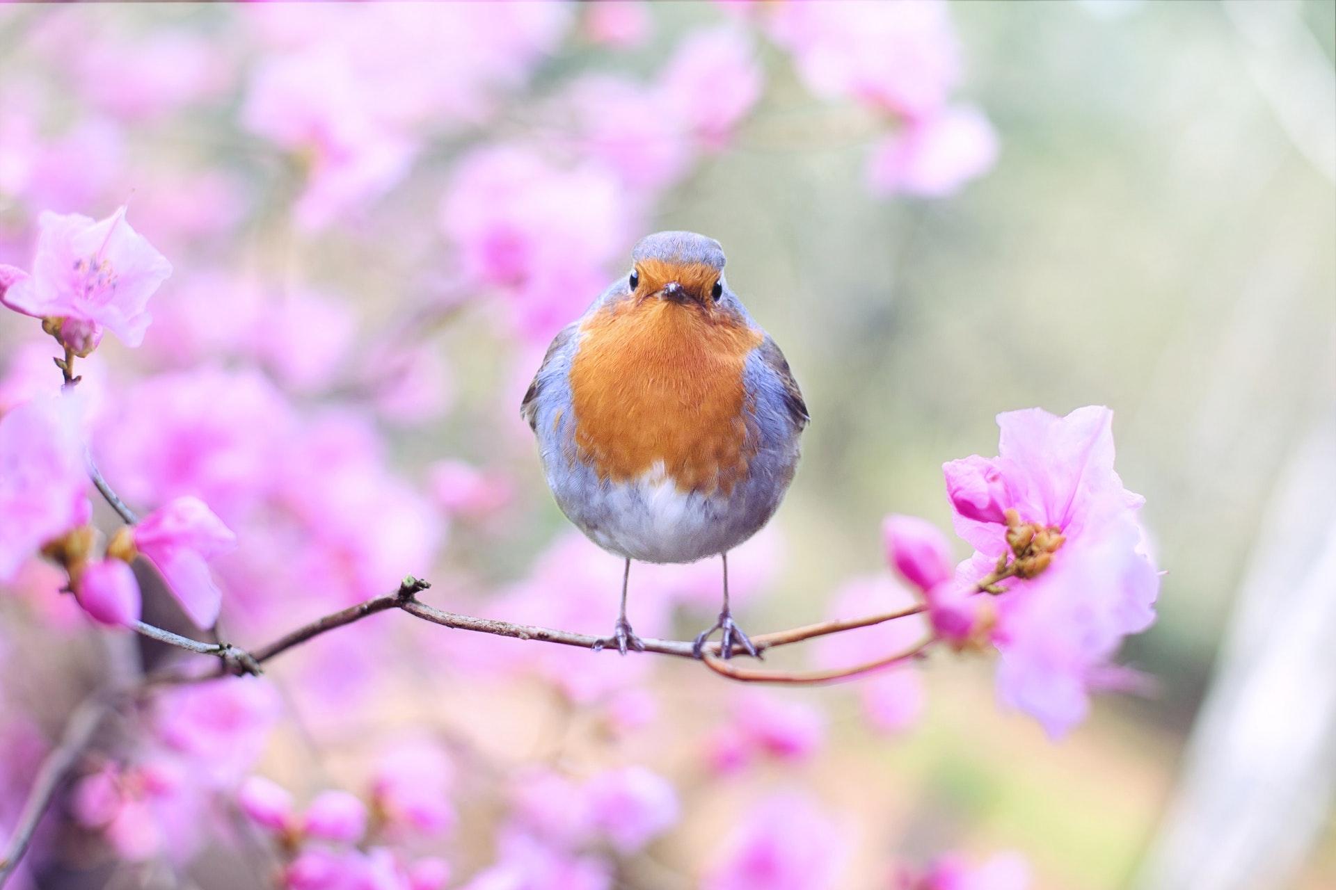 Поздравление с первым днем весны
