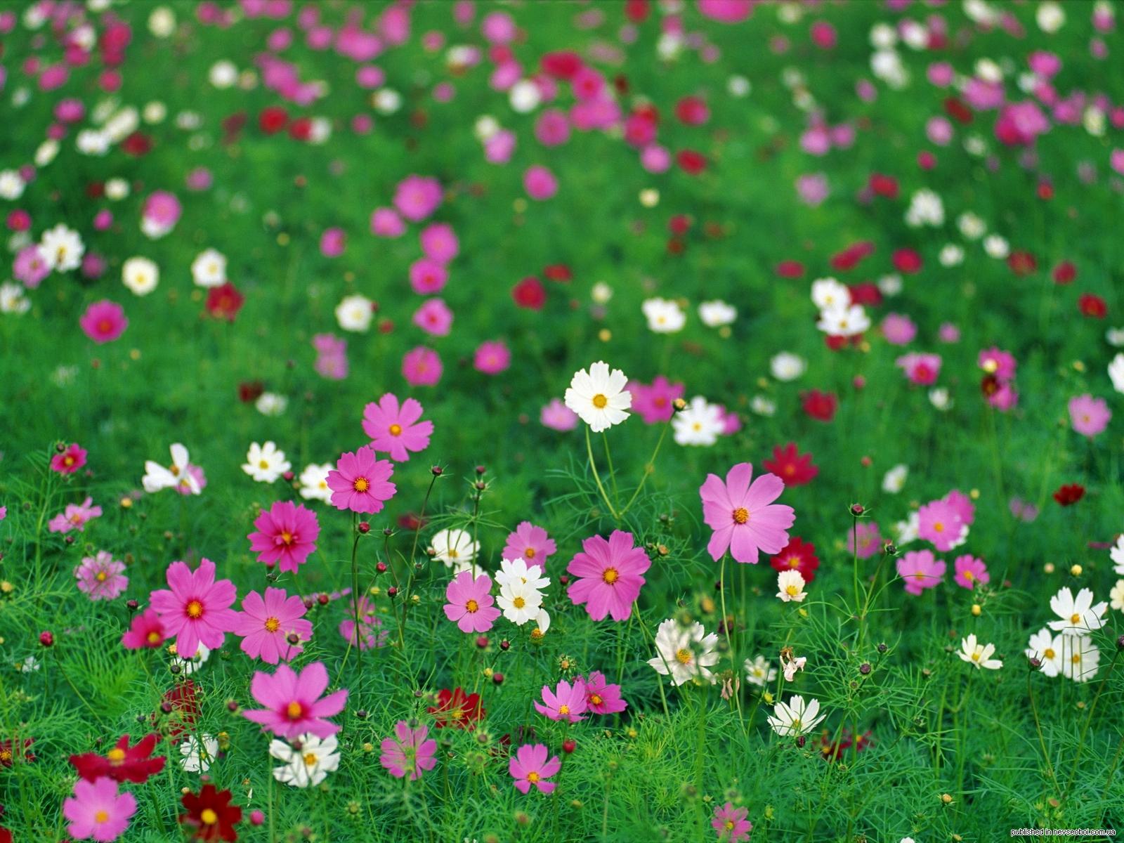 Сценарий итогового интегрированного занятия во второй младшей группе «цветочная полянка для милы»