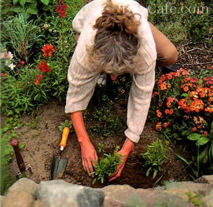 Как эффектно использовать садовые лилии в дизайне сада? подбор партнеров. фото — ботаничка.ru