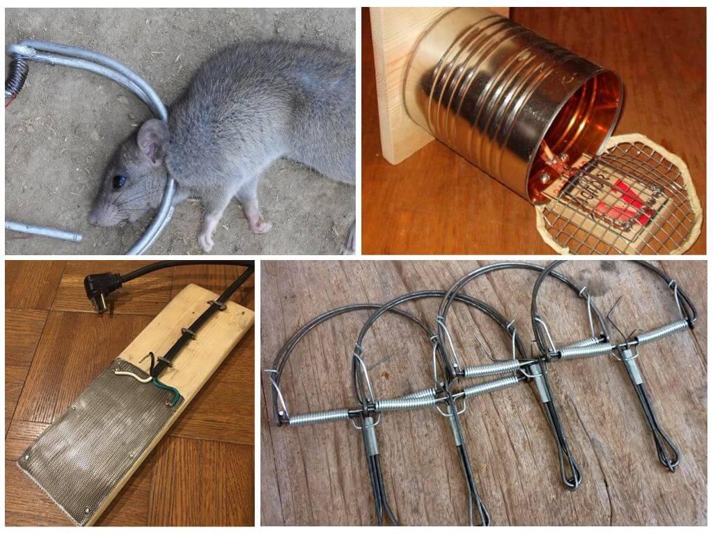 Как зарядить мышеловку, как её поставить: принцип работы и инструкция