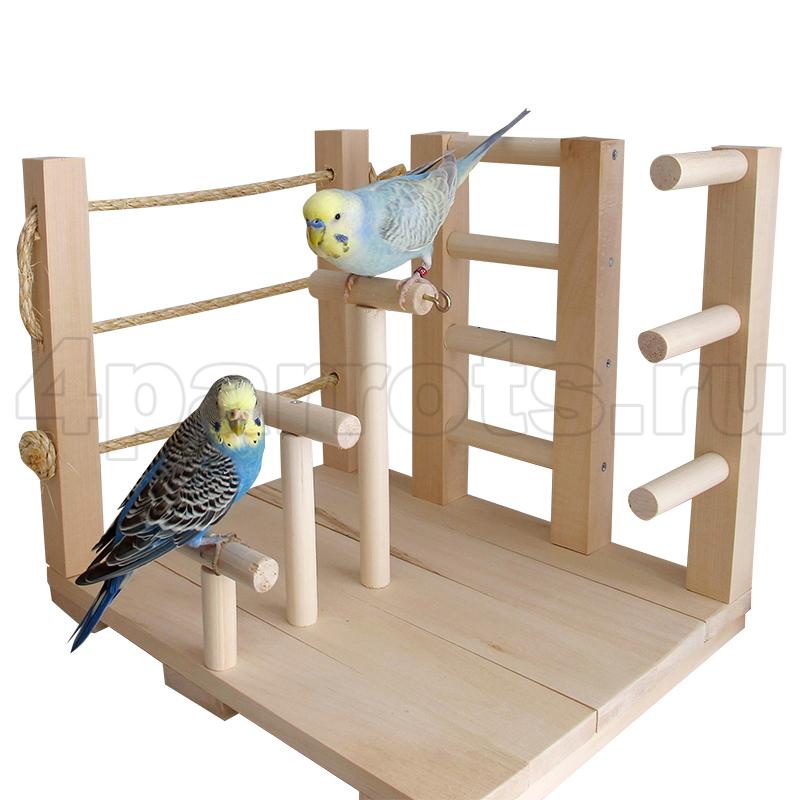 Игры и игрушки для волнистых попугаев