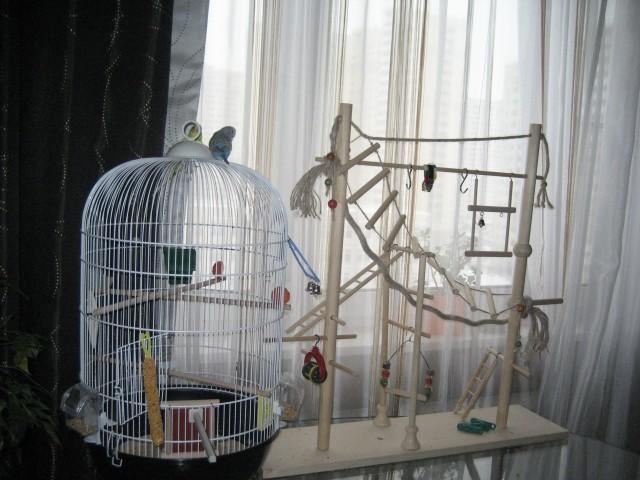 Игрушки для волнистых попугаев, самодельные и покупные
