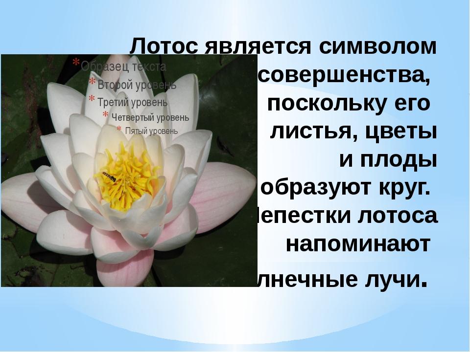 Лотос орехоносный: лечебные свойства и противопоказания, польза и вред | kazandoctor.ru