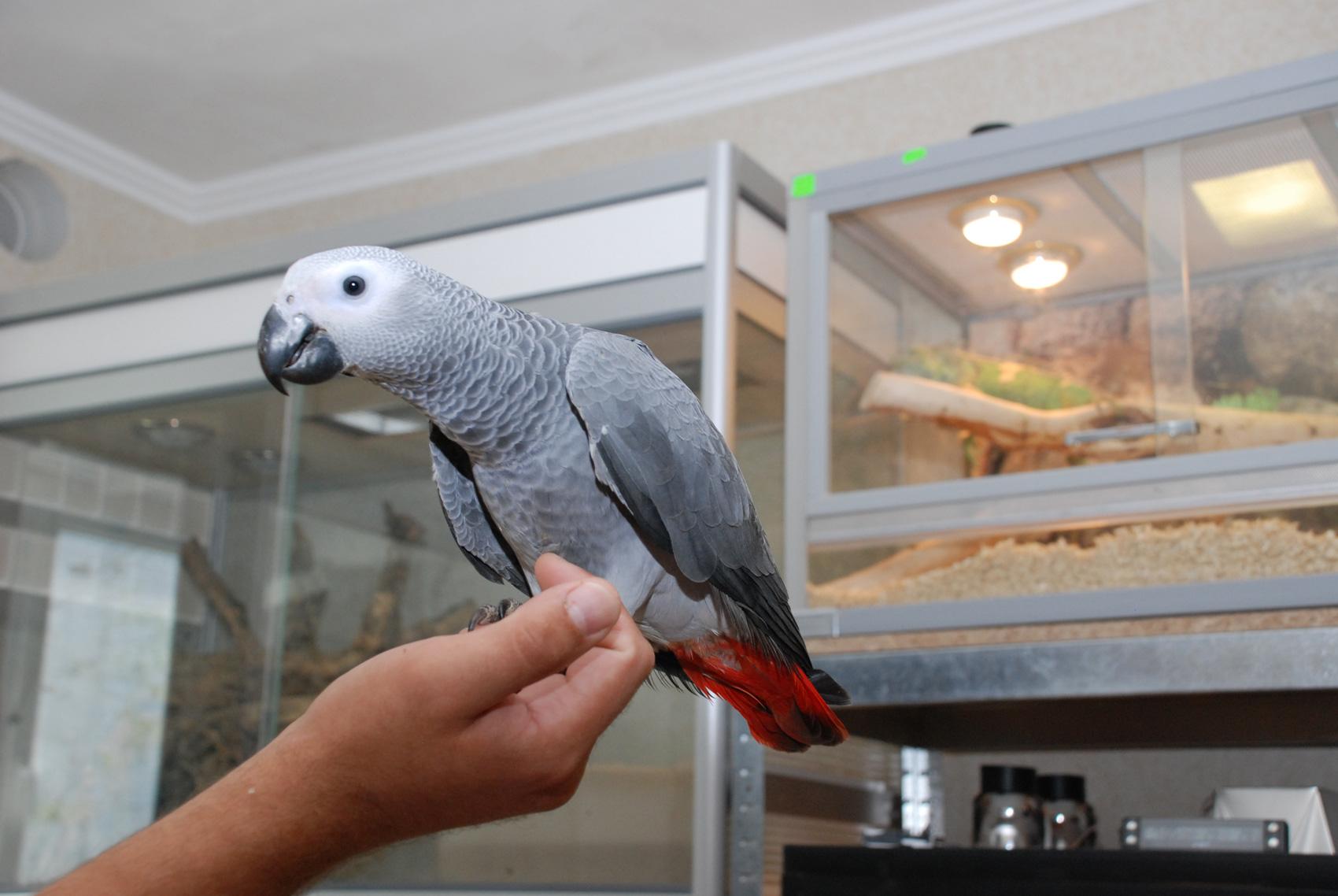 Виды попугаев: интересные факты о маленьких, средних и больших попугаях