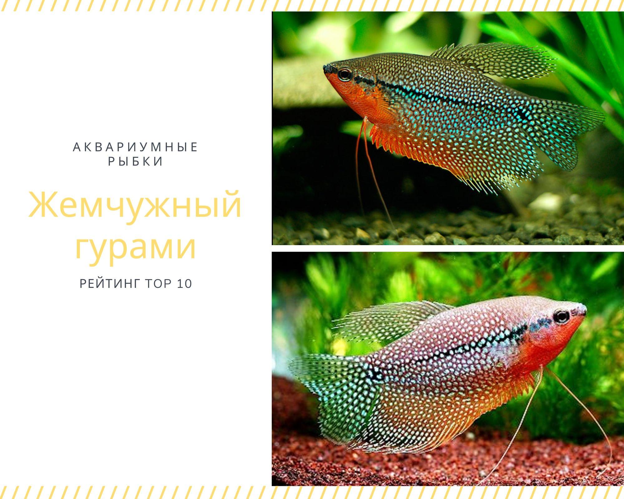 """Рыба """"волшебная золотая рыбка"""" – кулинарный рецепт"""