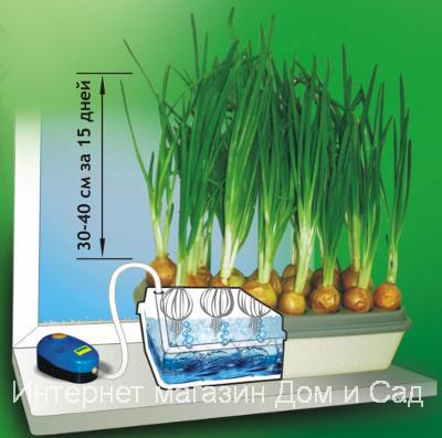 Принцип выращивания лука методом гидропоники