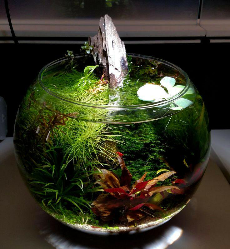 Мини-аквариумы (12 фото): каких рыбок завести в крошечном аквариуме? что нужно для маленьких аквариумов? светильники и растения для небольшого аквариума