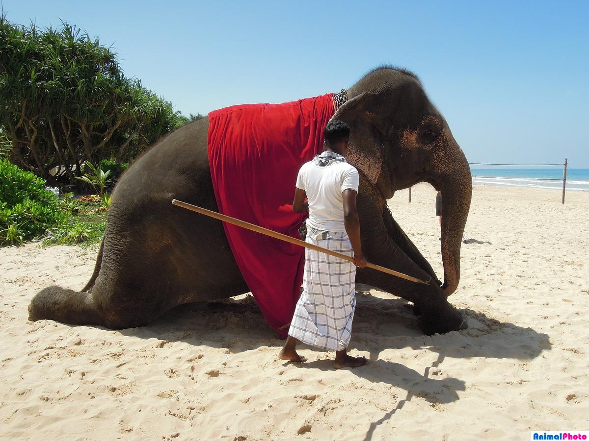 Изготовление бумажных фигур слона — поэтапная инструкция