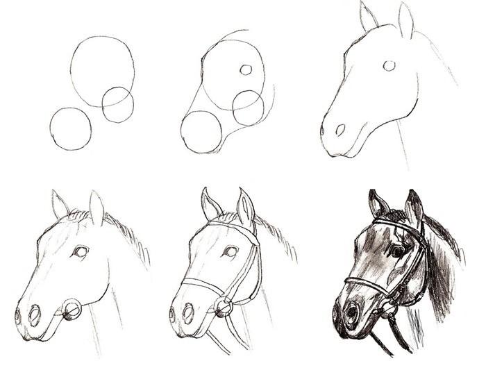 ► самые простые способы, как нарисовать лошадь карандашом поэтапно - фото креативные идеи