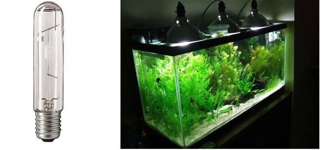 Лучшие лампы для аквариума: независимый топ-8
