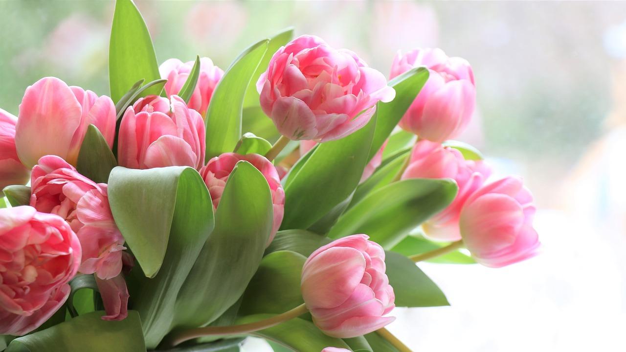 Женский день 8 марта: как отдыхаем, история, традиции, что дарить, когда и как поздравлять