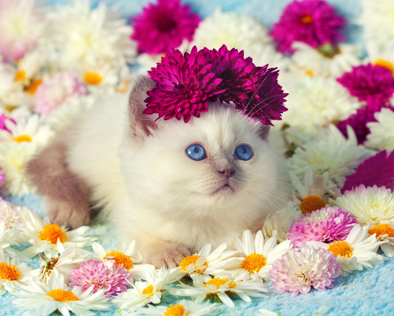 Милые цветочки – лепесточки