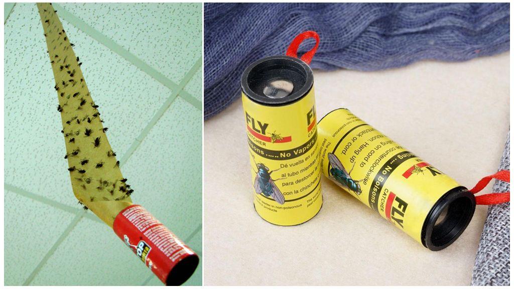 Как быстро и эффективно избавиться от мух в доме? липучка для мух и рецепты её приготовления в домашних условиях липучка от мух сделать самому