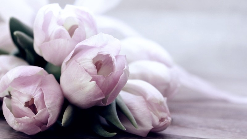 Искренние поздравления с 8 марта жене — 41 поздравление — stost.ru | поздравления с международным женским днем. страница 1