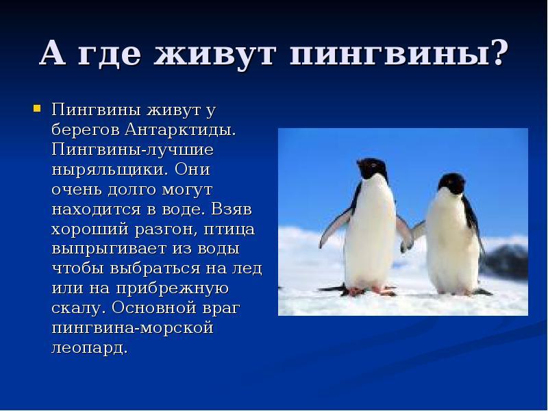 Субантарктический пингвин
