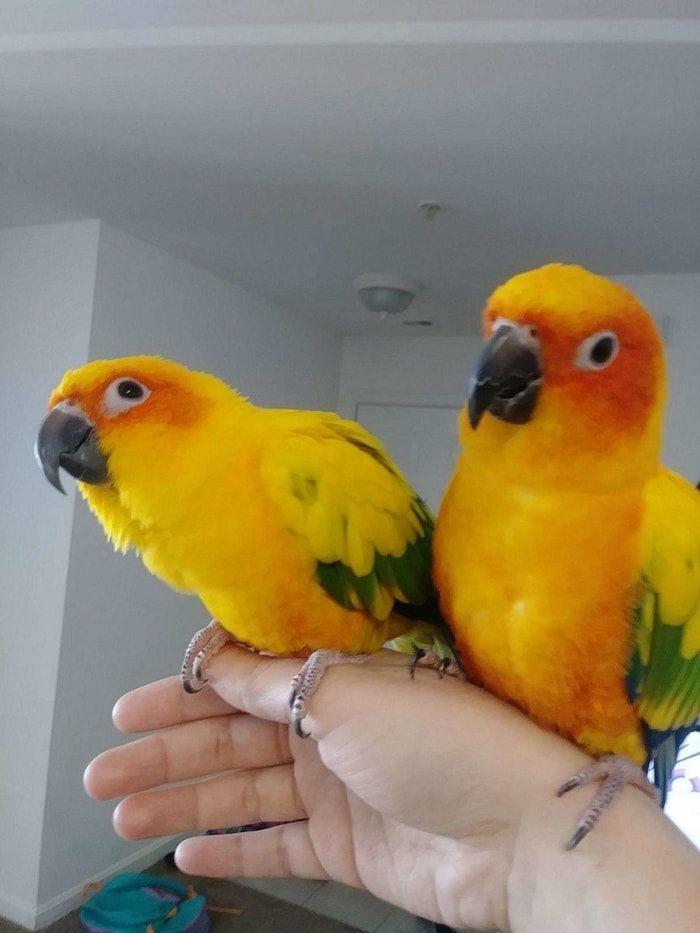 Какие бывают попугаи, тонкости и секреты содержания