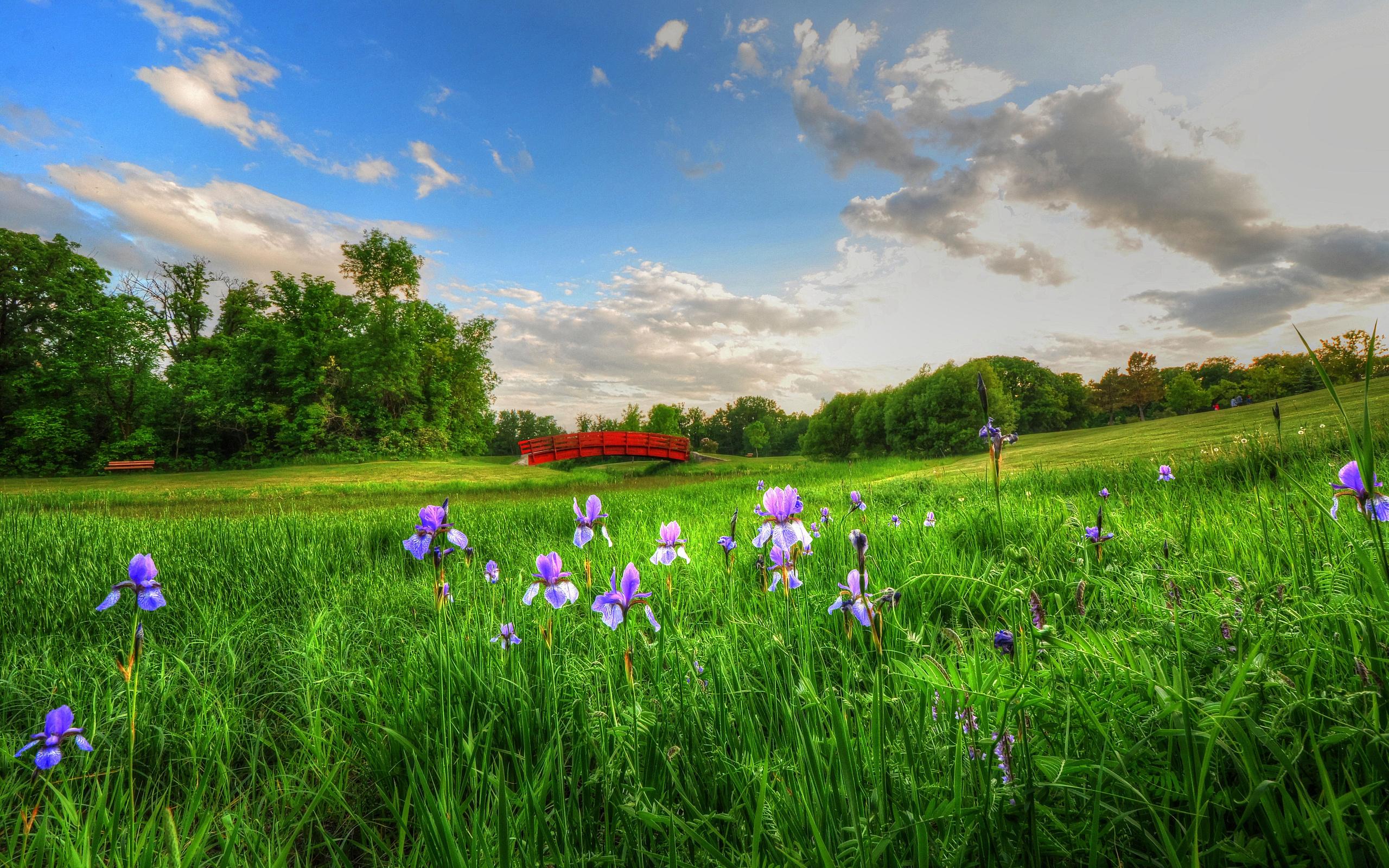 Картина панно рисунок 8 марта квиллинг цветочная полянка бумага бумага гофрированная бумажные полосы